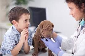 Bien choisir son assurance animal